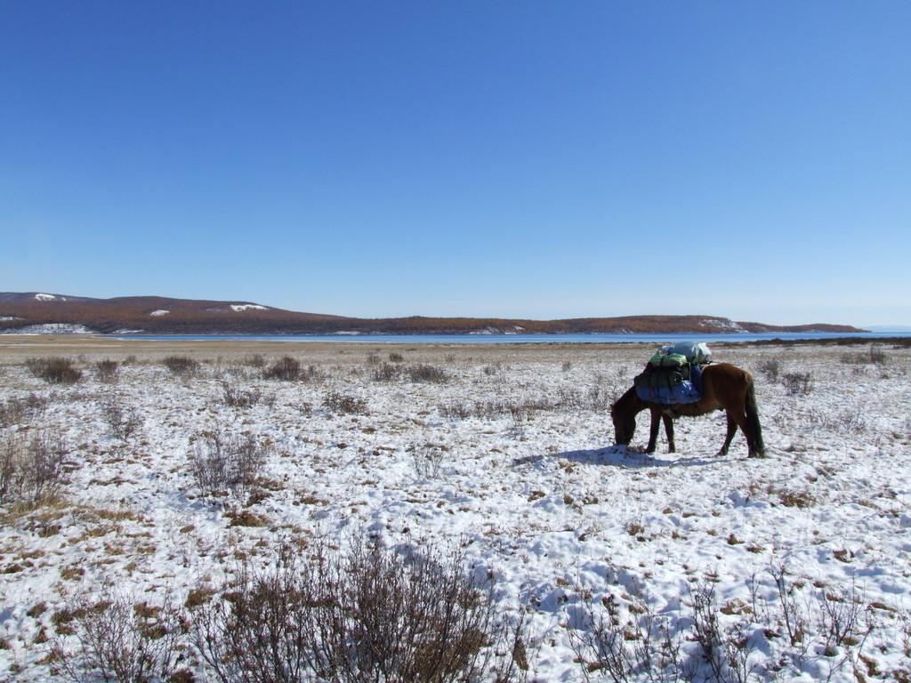 Le cheval comme compagnons d'hiver