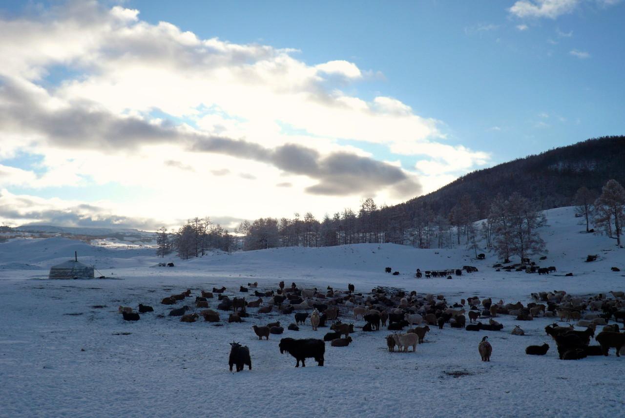 Un matin d'octobre en hiver au Zarkhan