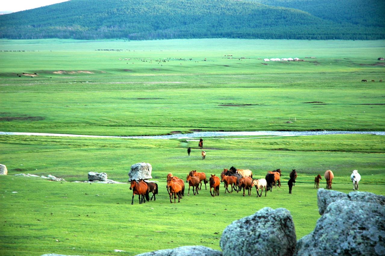 Les chevaux en liberté sur l'Orkhon