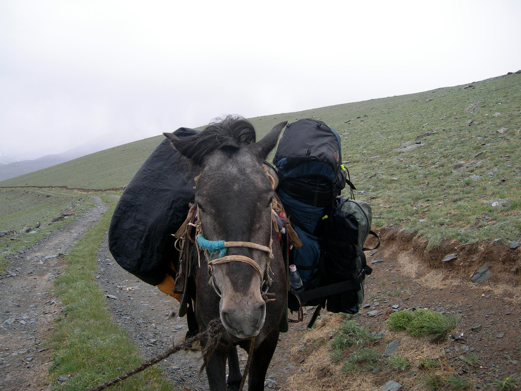 Portage du matériel à cheval