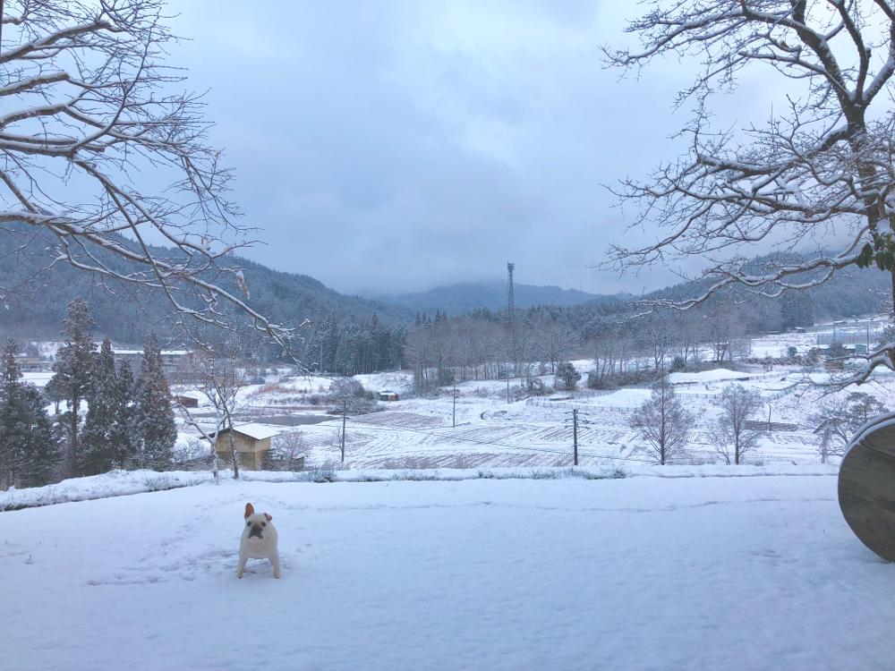 最後の雪かな、どーかな