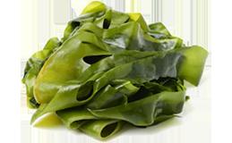 Laminaria Algen