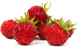 Erdbeeren Extrakt