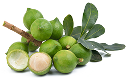 Macadamia Öl