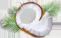 Kokos Öl