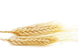Weizen Proteine
