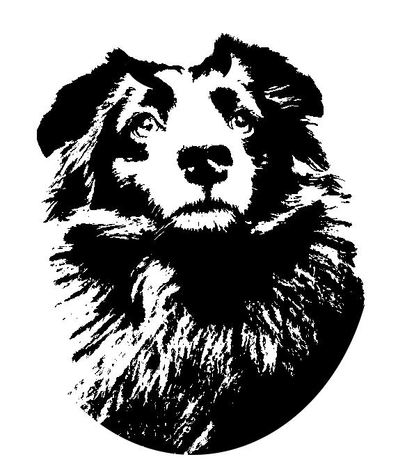 Stancil Hund