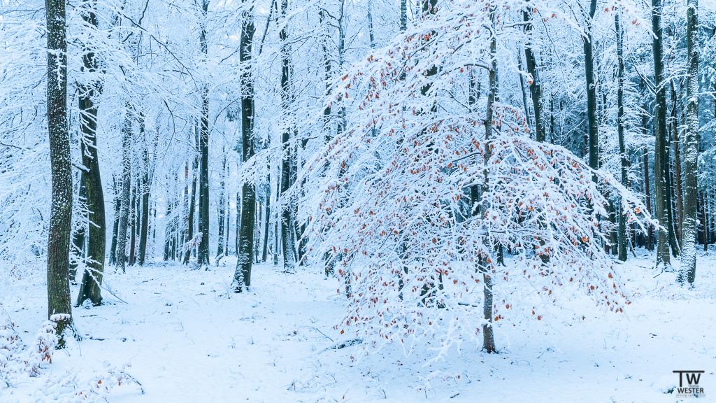 Ein wundervolles Waldstück (B1233)