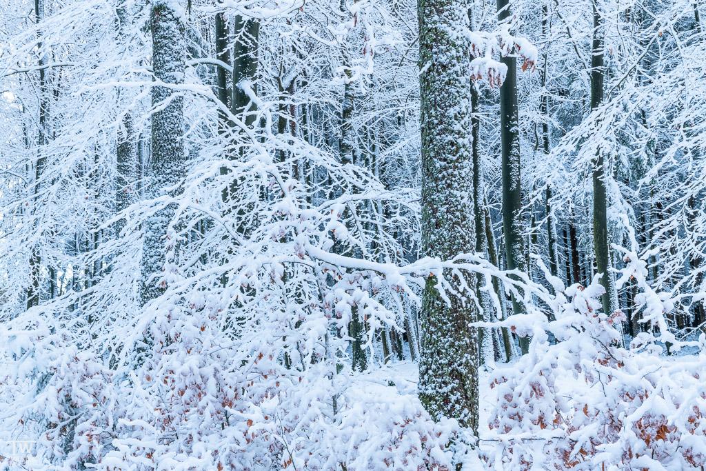 Die Vereisungen waren extrem und es war faszinierend, dich in diesem Waldstück zu bewegen (B1544)