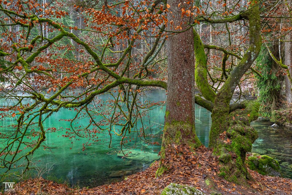 Wald der tausend Farben (B1565)