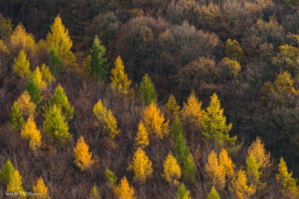 Auch diese Szene entstand im Nationalpark Eifel (B404)