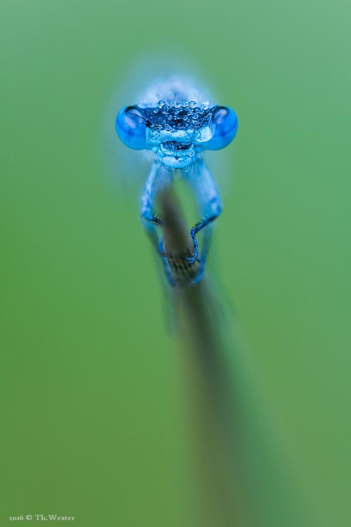 """Ein """"blaues Alien"""" ;-) (B634)"""