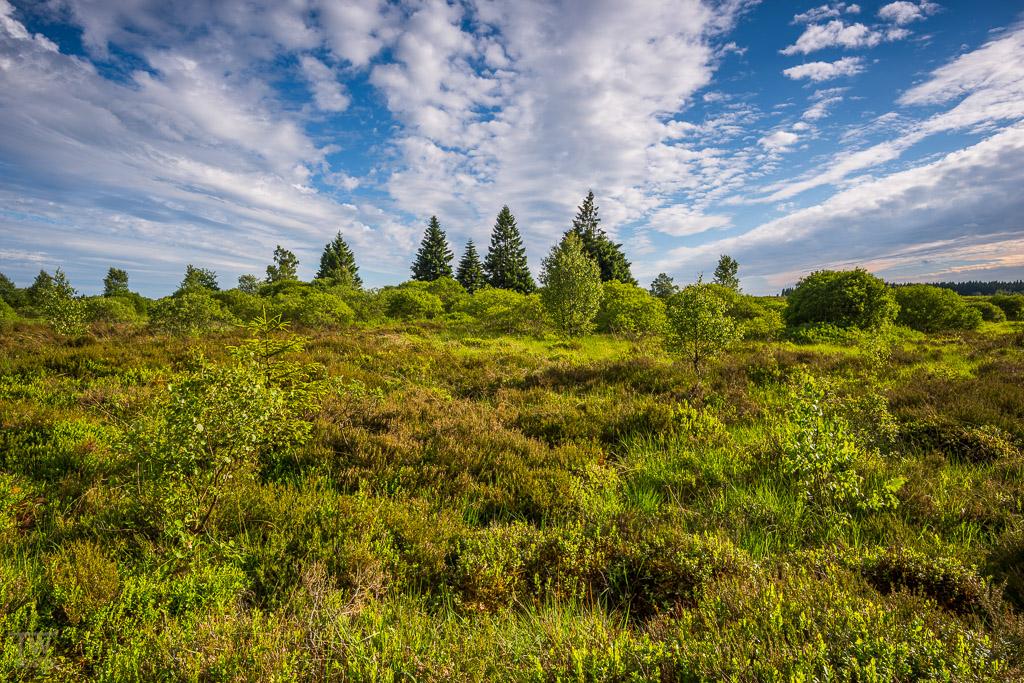 Ich möchte mit Bildern beginnen, die die Moorlandschaft nicht in spektakulärem Licht zeigen, die aber meines Erachtens nach zu dieser Serie gehören, wenn man ein komplettes Bild dieser interessanten Landschaft vermitteln möchte (B988)