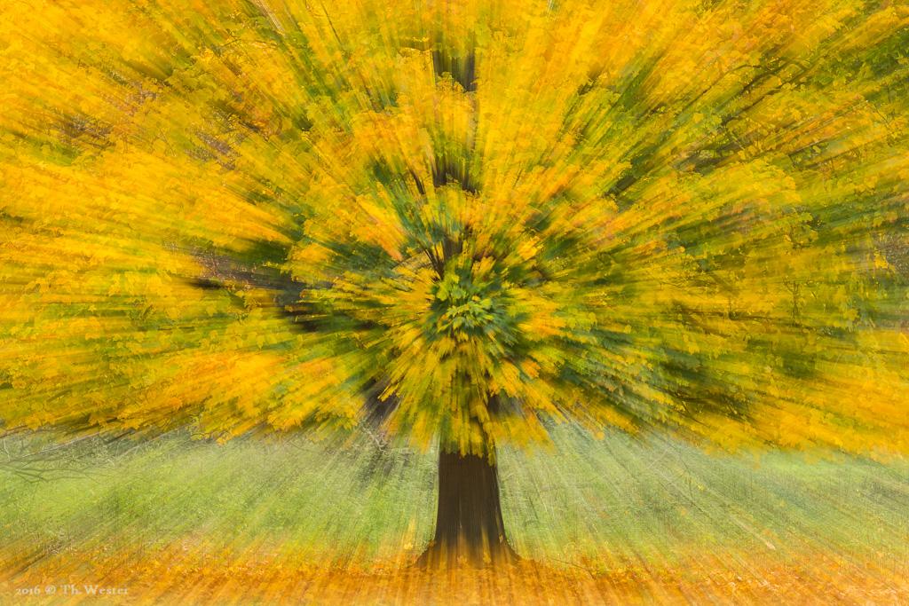 Etwas Abstraktes: dieses Bild entsteht ausschließlich in der Kamera (wie all meine Bilder) und nicht am PC. Dieser Effekt entsteht, wenn man während einer Langzeitbelichtungs-Aufnahme zoomt (B765)