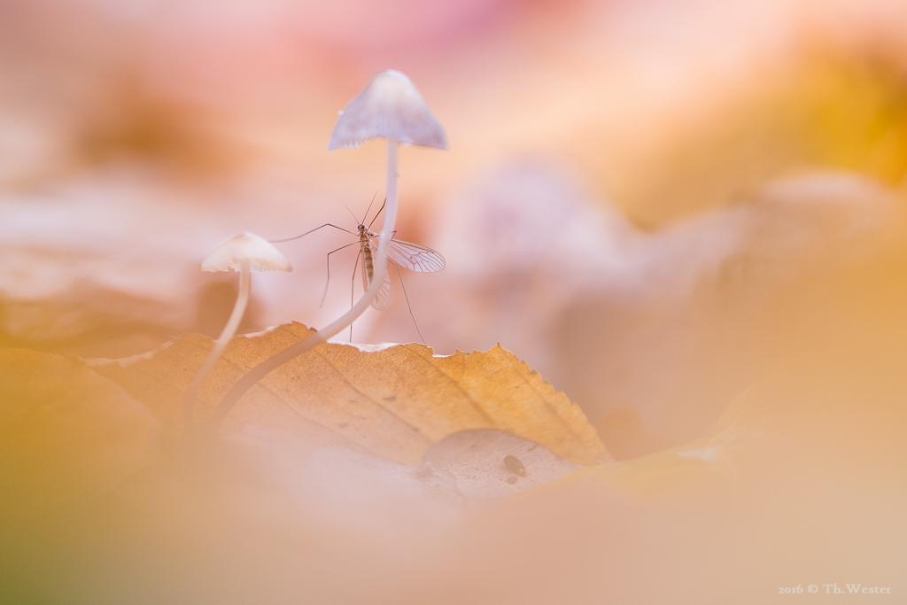 Herbstlaubbewohner (B811)