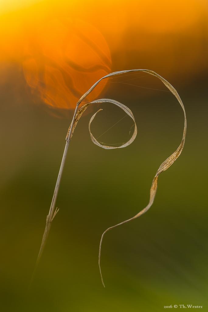 Einfach Trockengras (B516)