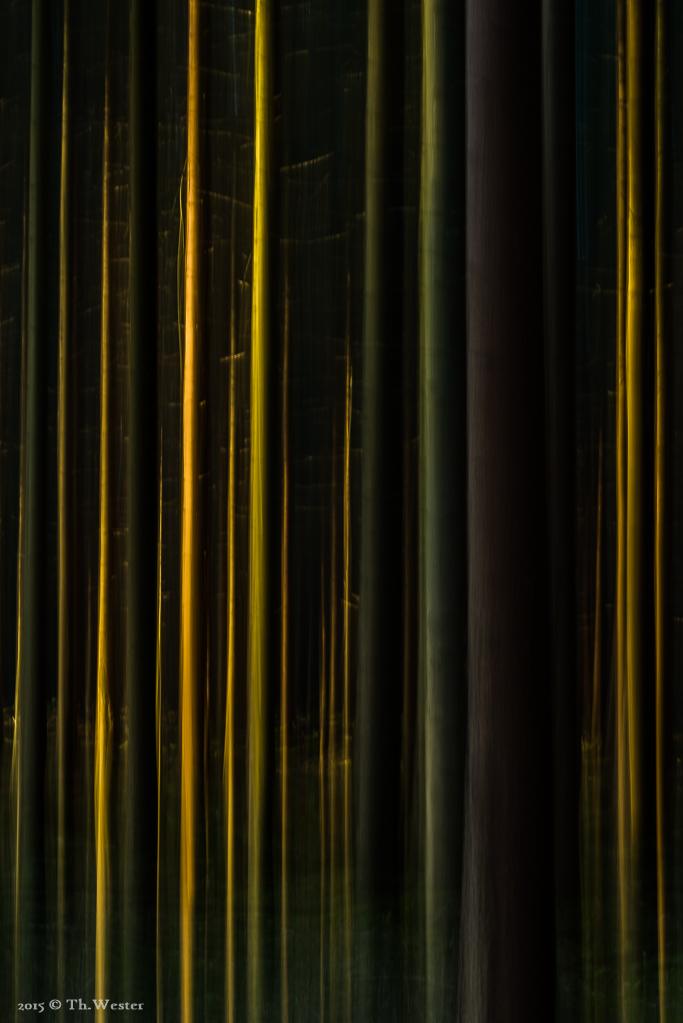 Abstraktes aus dem Wald (B420)