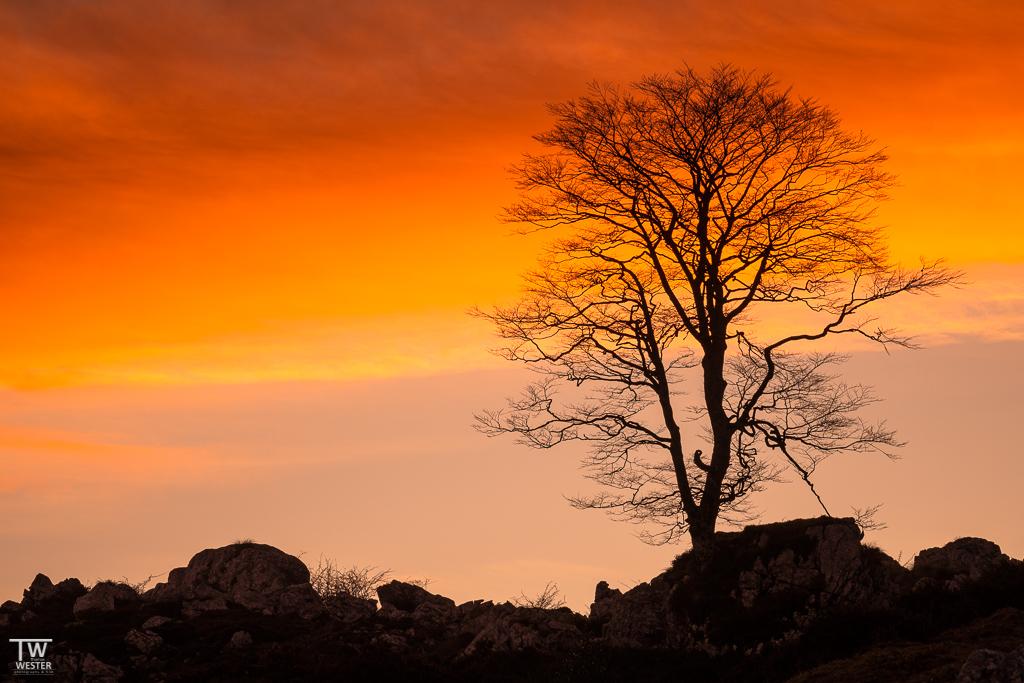 Dieses Exemplar gefiel mir sehr und bei Sonnenaufgang konnte ich dieses Bild umsetzen (B1894)