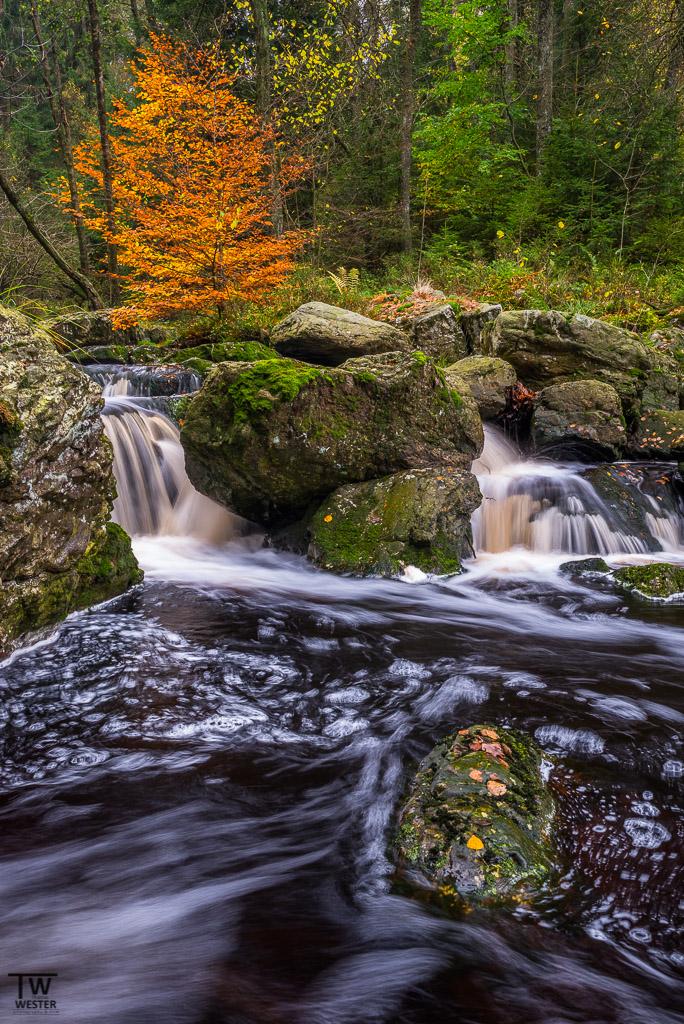 Herbst im Hochformat (B1145)