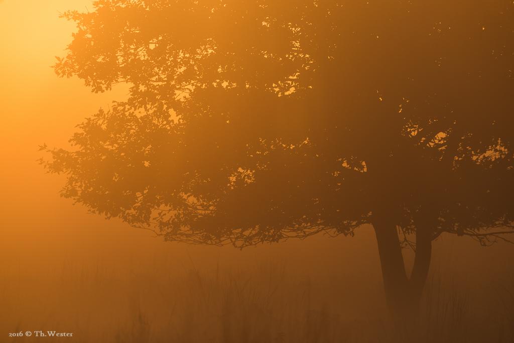 Der Bodennebel, gepaart mit einem intensiven Sonnenaufgang, ließ die Luft glühen (B773)