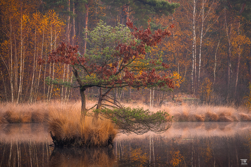 """Herbstinsel"" (B1831)"