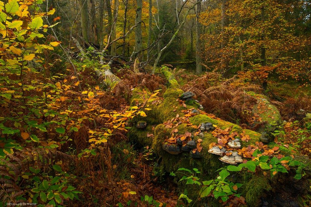 Die Wälder sind einfach toll und unheimlich vielfältig an Pflanzen (B211)