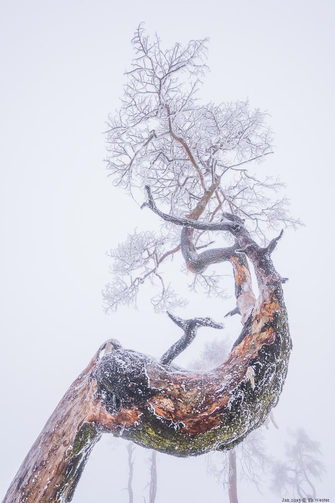 Insgesamt habe ich mich zwei Stunden nur an diesem Baum aufgehalten, den genauen Bildausschnitt zu finden, war meist mit 10-fachen Positionswechsel des Statives verbunden (B256)
