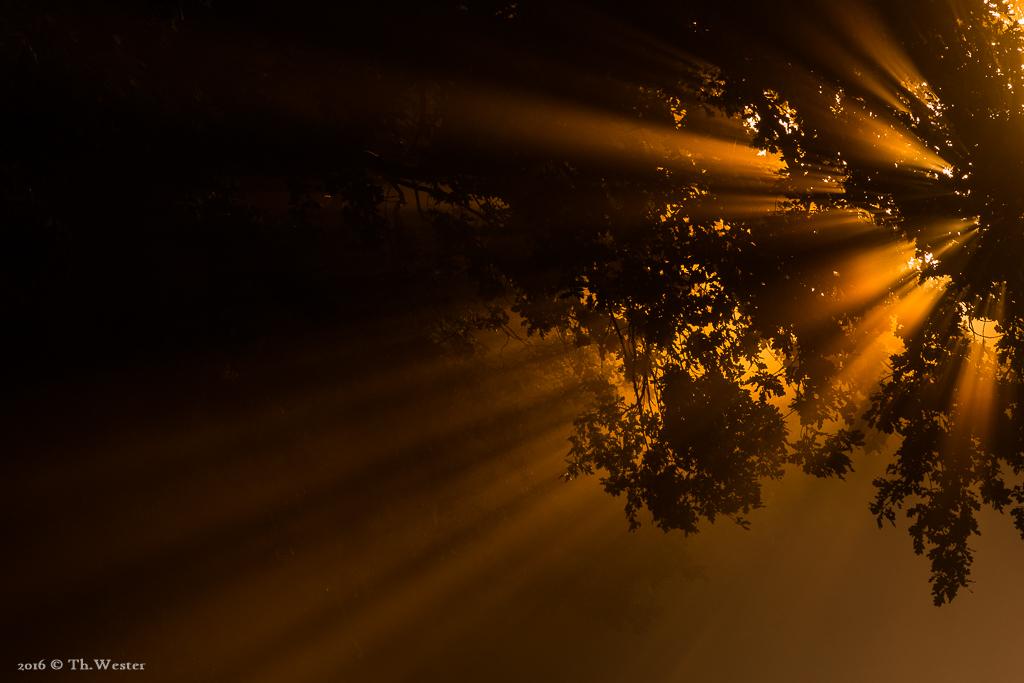 Noch mehr Lichtstrahlen (B653)