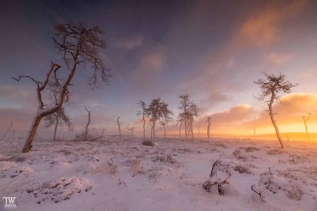 Sonne und Nebel – immer ein toller Mix… (B1555)