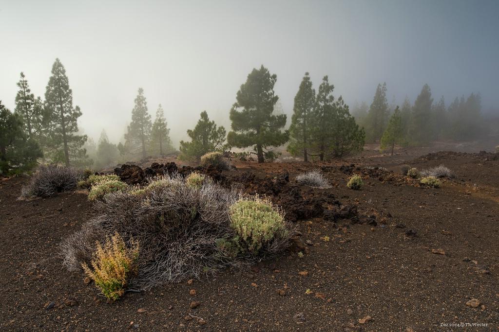 Auf dem Weg durch die Berge gerät man auch immer wieder in Wolken- oder Nebelfelder, die Stimmung ist dort teils sehr mystisch (B232)