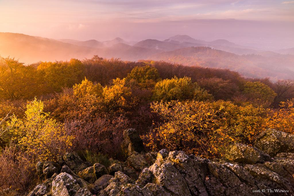 An diesem Morgen vor zwei Wochen war mir das Licht hold und das Panorama über das Siebengebirge war herrlich (B805)
