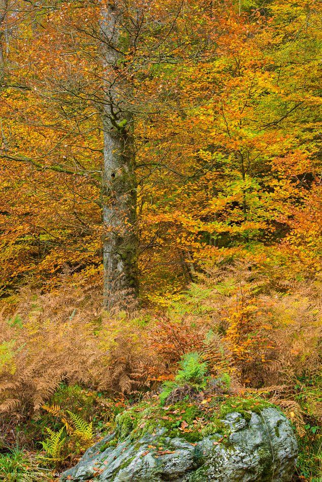 Volle Herbstfarben (B204)