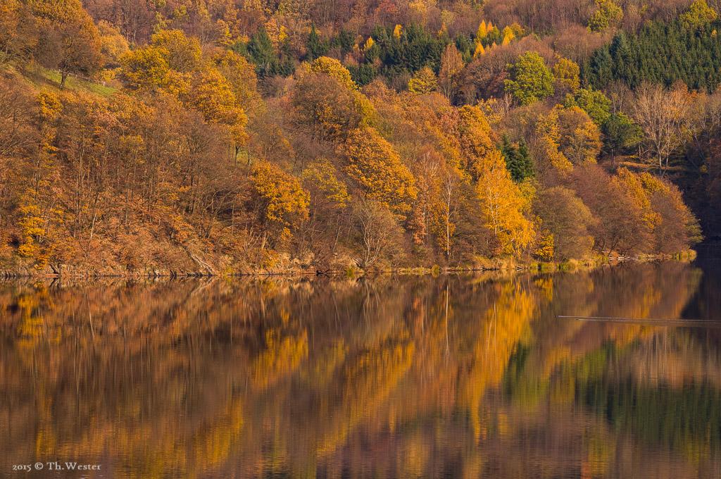 """Gesehen in der Nähe des schönen Ortes """"Einruhr"""" im Nationalpark Eifel (B408)"""