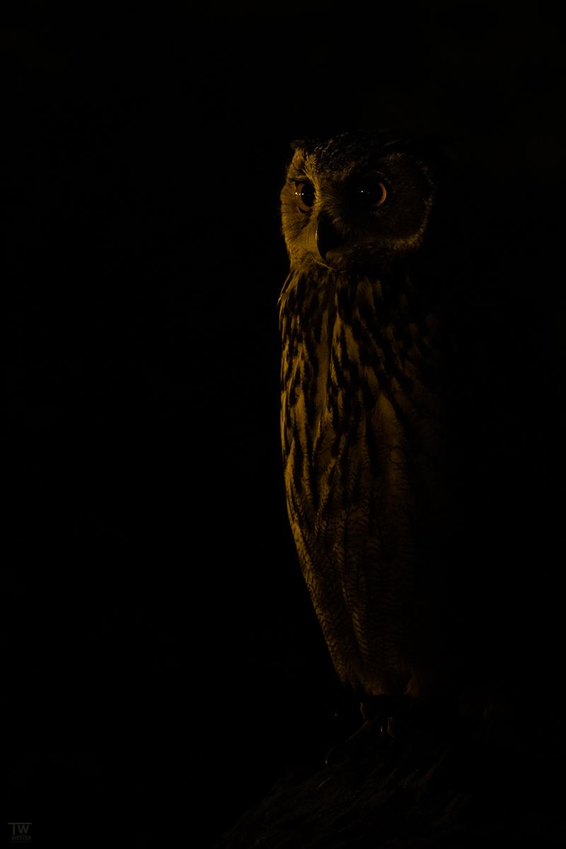 In dieser letzten Szene hatte ich zwar mehrere Minuten Zeit - doch es war so dunkel, dass ich knapp 100 Aufnahmen brauchte, um diese Bildidee schlussendlich im Kasten zu haben (B2695)