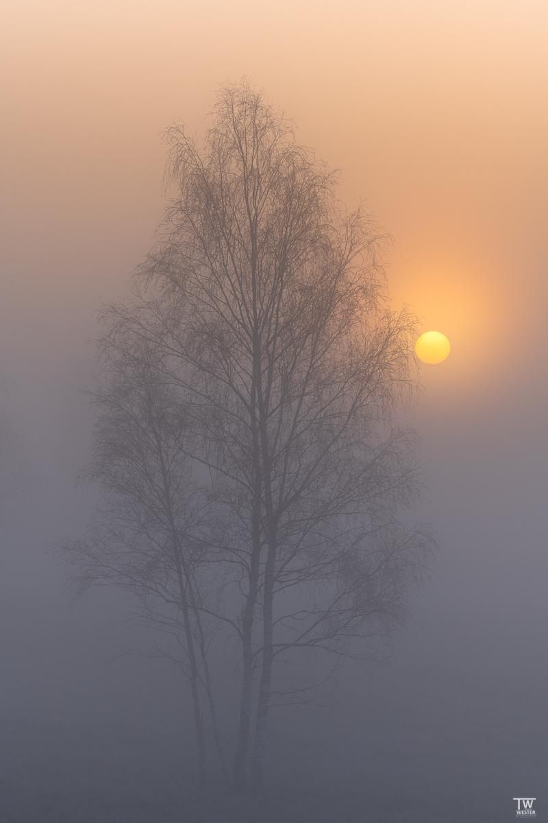 Sunshine (B2300)