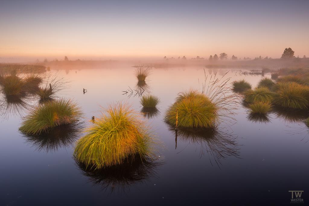 Zurück zu den Nebelstimmungen: hier mit einem sehr sanften Morgenlicht im Rücken - ein toller Moment (B1193)