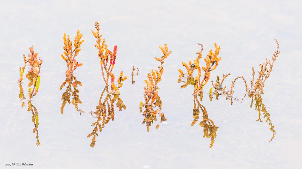 High-Key-Wasserpflanzen ;-) (B388)