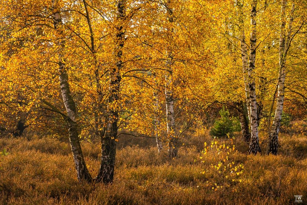Herbst pur (B1840)
