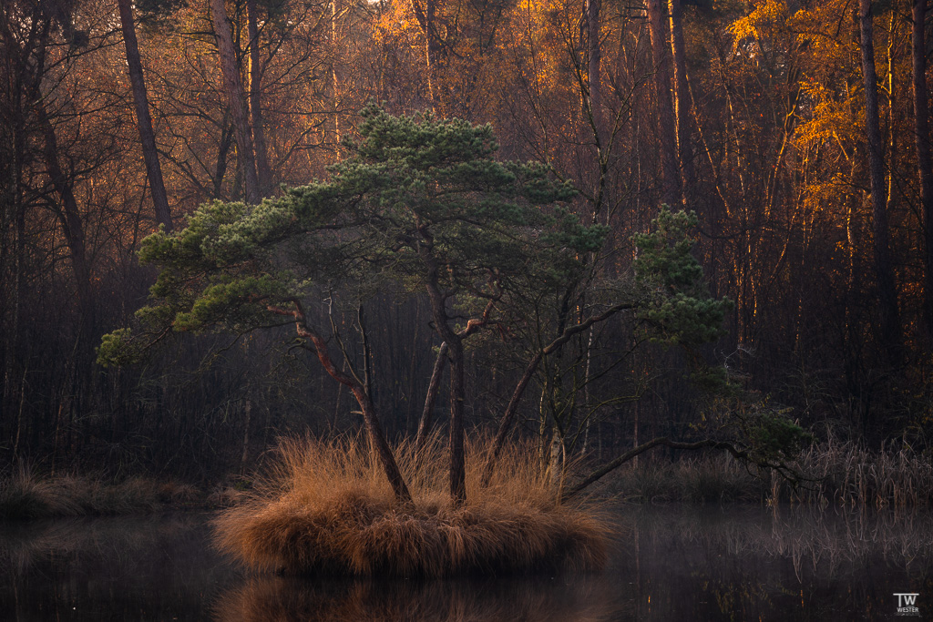 An diesem dunklen Moorsee wurde der Wald im Hintergrund schon beleuchtet (B1859)