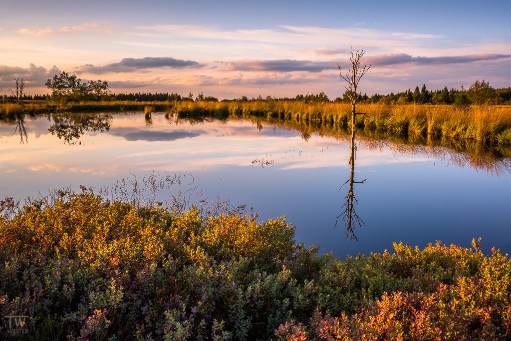 Kommen wir zu den sonnigeren Lichtstimmungen: hier erkennt man bereits die Heidelbeeren in den ersten Herbstfarben (B1201)