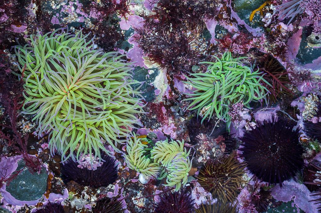 Bei Ebbe wird die Unterwasserlandschaft sichtbar (B852)