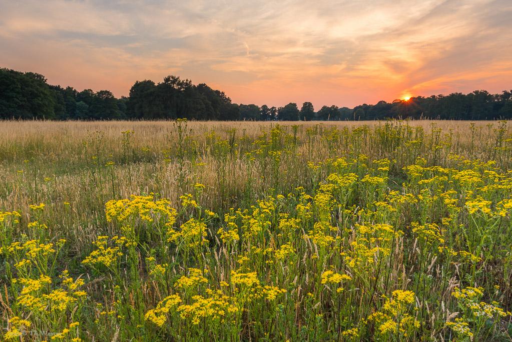 Teile des Kölner Stadtwaldes sind im Sommer glücklicherweise naturbelassen (B352)