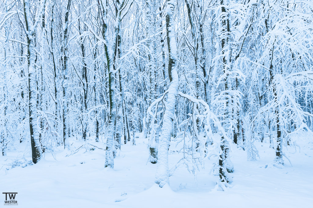 Ein Waldstück mit extremer Schneelage (B1230)