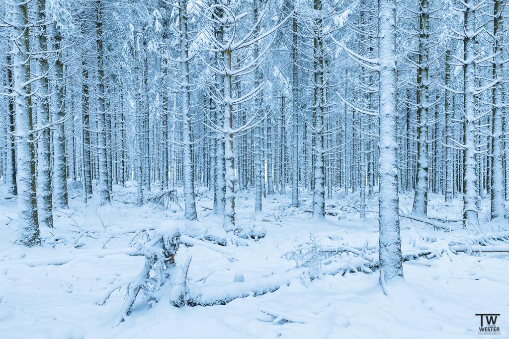 """Durch die beiden heftigen Herbststürme """"Burglinde"""" und """"Frederike"""" zeigten sich stellenweise sehr viele entwurzelte Bäume (B1226)"""