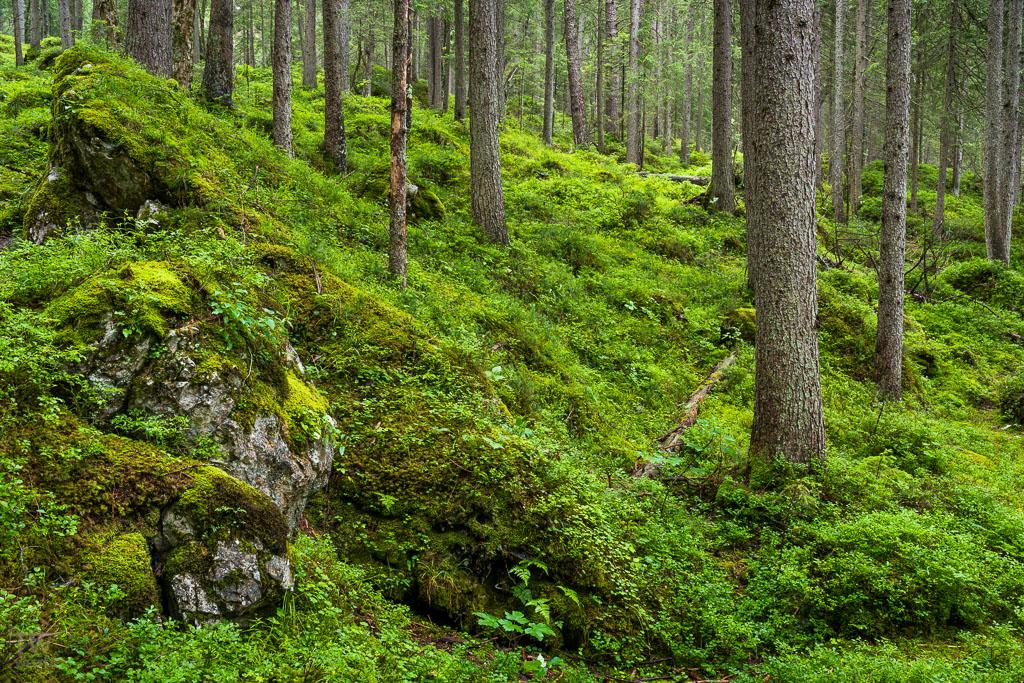 Bayrischer Wald (B1055)