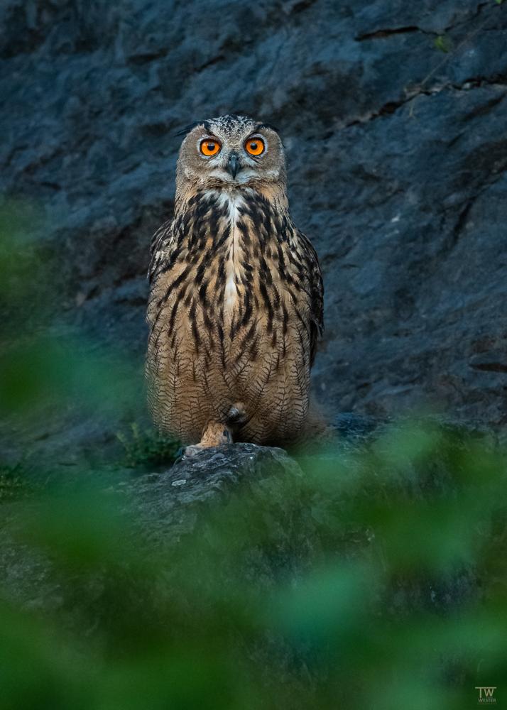 Ein tiefer Blick in die faszinierenden Augen (B2660)