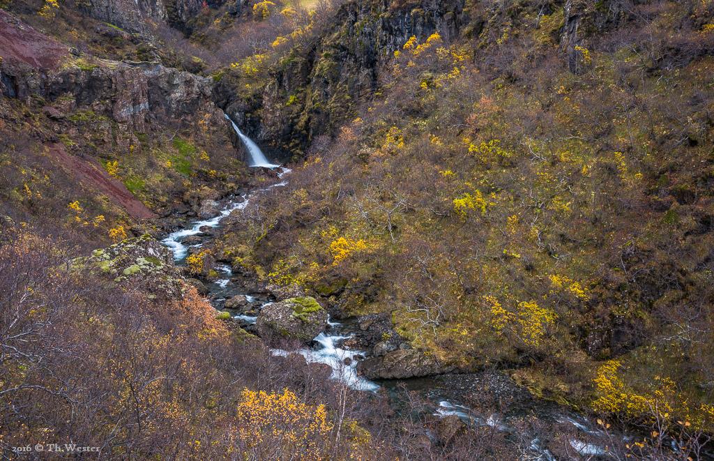 Der Höhepunkt des Herbstes war auf Island bereits vorbei, doch an einigen Stellen gab es noch sehr schöne Farben zu sehen (B728)