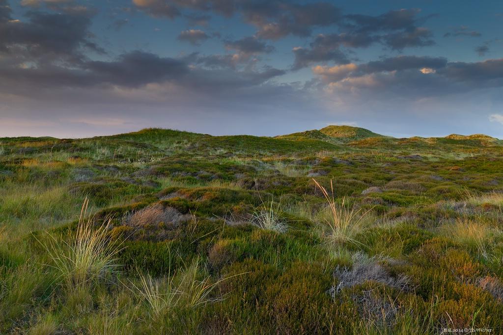 Dünenlandschaft (B151)