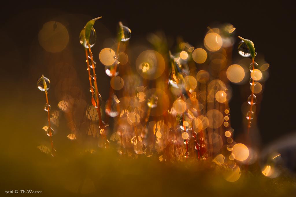 Gestern hatte ich zum Abschluss der Serie Glück: nachdem es bis zum Nachmittag regnete, kamen am Abend noch für ganz kurze Zeit ein paar Lichtstrahlen in den Wald (B455)