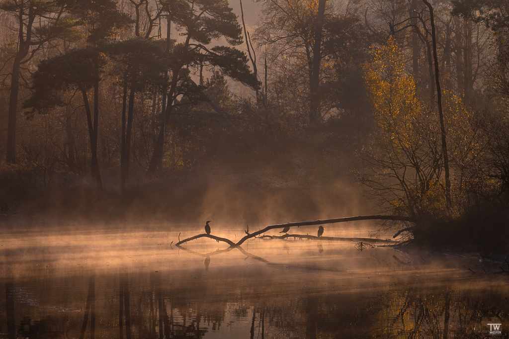 """""""Morgennebel"""" - mein persönliches Lieblingsbild der Serie (B1848)"""